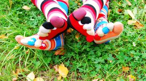 Socks in autumn. Royalty Free Stock Photo
