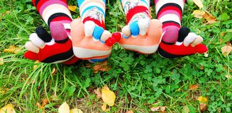 Socks In Autumn. Royalty Free Stock Image