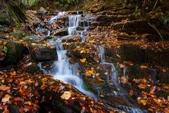 Soco nedgångar i Autumn Smoky Mountains National Park Arkivfoton