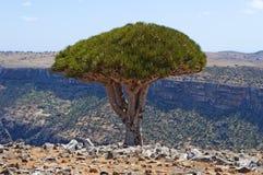 Socotra ö, Indiska oceanen, Yemen, Mellanösten Arkivbilder