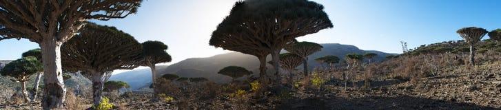 Socotra ö, Indiska oceanen, Yemen, Mellanösten Royaltyfri Bild