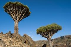 Socotra ö, Indiska oceanen, Yemen, Mellanösten Royaltyfria Bilder