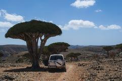 Socotra ö, Indiska oceanen, Yemen, Mellanösten Fotografering för Bildbyråer