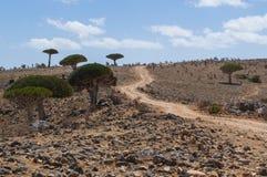 Socotra ö, Indiska oceanen, Yemen, Mellanösten Royaltyfri Fotografi
