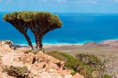 Socotra, Überblick von Homhil-Hochebene: Dragon Blood-Bäume und das Arabische Meer Stockfotografie