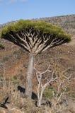 Socotra, νησί, Ινδικός Ωκεανός, Υεμένη, Μέση Ανατολή Στοκ φωτογραφία με δικαίωμα ελεύθερης χρήσης
