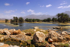 Socotra Fotografia de Stock Royalty Free