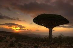 Socotra fotografie stock
