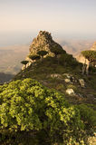 Socotra Stock Photography