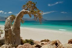 Socotra 288 Stock Photos