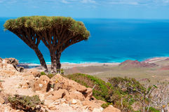 Socotra, descripción de la meseta de Homhil: Árboles de Dragon Blood y el Mar Arábigo fotografía de archivo