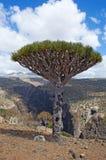 Socotra, eiland, Indische Oceaan, Yemen, Midden-Oosten Stock Foto's