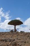 Socotra, eiland, Indische Oceaan, Yemen, Midden-Oosten Royalty-vrije Stock Afbeelding