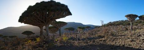 Socotra, eiland, Indische Oceaan, Yemen, Midden-Oosten Stock Afbeeldingen