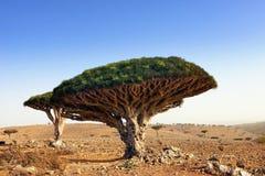 Socotra Stock Photos