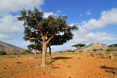 Socotra Royalty Free Stock Images