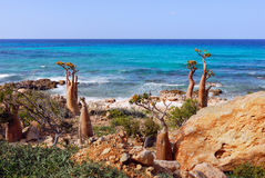 Socotra endemics Stock Images