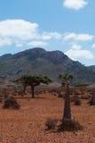 Socotra, Iémen, vista geral da floresta de Dragon Blood Trees no platô de Homhil foto de stock