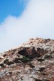 Socotra, Iémen, vista geral da floresta de Dragon Blood Trees no platô de Homhil fotografia de stock royalty free