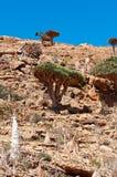 Socotra, Iémen, vista geral da floresta de Dragon Blood Trees no platô de Homhil imagem de stock