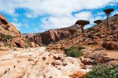 Socotra, Iémen, vista geral da floresta de Dragon Blood Trees no platô de Homhil imagens de stock