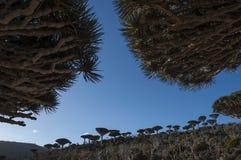 Socotra, ilha, Oceano Índico, Iémen, Médio Oriente Foto de Stock Royalty Free