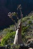 Socotra, ilha, Oceano Índico, Iémen, Médio Oriente Foto de Stock