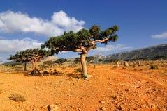 Socotra-Insel stockbild