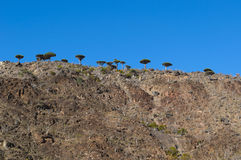 Socotra, Insel, der Indische Ozean, der Jemen, Mittlere Osten Lizenzfreies Stockfoto
