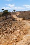 Socotra, Insel, der Indische Ozean, der Jemen, Mittlere Osten Stockfotografie