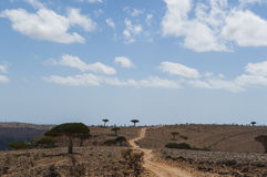 Socotra, isla, el Océano Índico, Yemen, Oriente Medio Foto de archivo libre de regalías