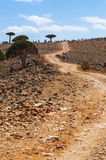 Socotra, isla, el Océano Índico, Yemen, Oriente Medio Fotografía de archivo