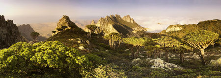 Socotra island Royalty Free Stock Images