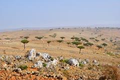 Socotra island, Yemen Stock Photography