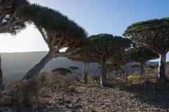 Socotra, isola, Oceano Indiano, Yemen, Medio Oriente Immagine Stock Libera da Diritti