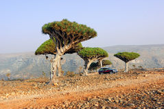 Socotra off-road safari Royalty Free Stock Photography