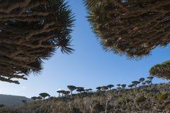 Socotra, wyspa, ocean indyjski, Jemen, Środkowy Wschód Zdjęcia Royalty Free