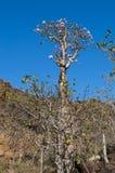 Socotra, wyspa, ocean indyjski, Jemen, Środkowy Wschód Fotografia Stock