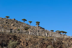 Socotra, wyspa, ocean indyjski, Jemen, Środkowy Wschód Obraz Royalty Free