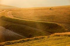 Soczewicy kwiecenie w Castelluccio Di Norcia Tysiące kolory Zdjęcie Stock