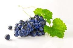 Soczyści dojrzali i wyśmienicie winogrona zdjęcie royalty free