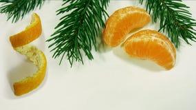 Soczyści jaskrawi pomarańczowi plasterki tangerines kłamają wraz z zieloną gałąź jedlinowy drzewo na bielu Miejsce dla twój tekst obraz stock
