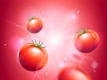Soczyści pomidory z wodnymi kroplami na czerwonym opromienionym bokeh tle Silny sunbeam lub światło Projektów elementy dla Zdjęcie Stock