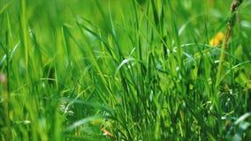 Soczyści zieleni mosiędzy ruchy zdjęcie wideo