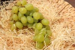 Soczyści winogrona Zdjęcie Royalty Free