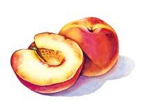 Soczysta brzoskwini owoc akwarela royalty ilustracja