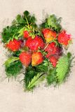 Soczysta dojrzała truskawka na zielonych liściach Akrylowy atrament Zdjęcie Royalty Free