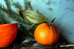 Soczysta pomarańczowa herbaciana para na tle jedlinowe gałąź Uczucie świeżość i antycypacja nowy rok fotografia royalty free