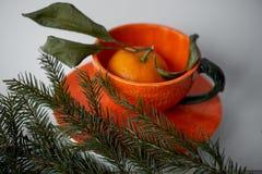 Soczysta pomarańczowa herbaciana para na tle jedlinowe gałąź Uczucie świeżość i antycypacja nowy rok obrazy royalty free
