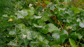 Soczysta trawa po deszczu z wodnymi kroplami Zdjęcie Stock